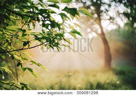 Scenic Sunny Natural Green Background. Sunshine On Beautiful Leaves. Amazing Morning Landscape Of Na