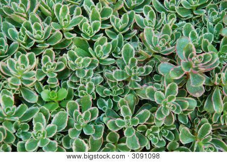 Colorful Succulent Pattern