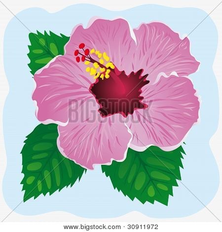 Hibiscus on a blue background. Vector illustration