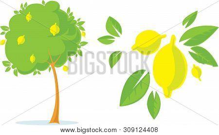 Lemon Tree With Lemon Flat Fresh Design With Citrus - Vector Illustration