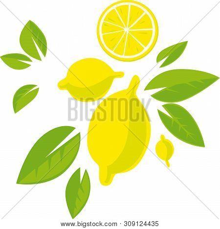Tropical Lemon Design With Fruit And Leaf - Flat Design Vector Illustration
