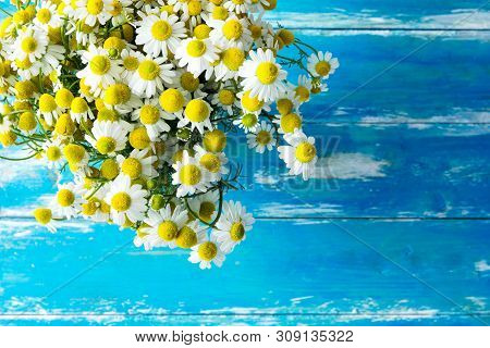 Bouquet Of Freshly Picked Camomile Flowers On Aged Plank Wood Blue Tabletop. Beauty Skin Care Health