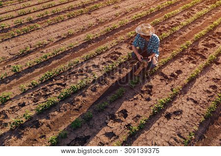 Farmer With Drone Remote Controller In Soybean Field, Aerial View Of Farm Worker Observing Crop Plan