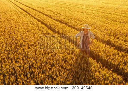 Aerial View Of Farmer Standing In Golden Ripe Wheat Field And Observing Crops. Image Is Taken From D