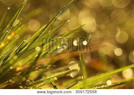 Morning Dew On Grass Blades In Warm Sunlight.