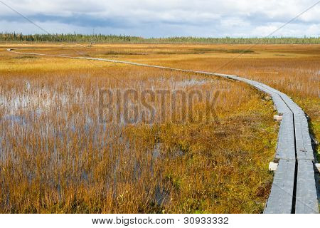 Path To Wetland
