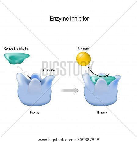 Enzyme Inhibitor Is A Molecule That Binds (blocking) To An Enzyme And Decreases Its Activity. Compet