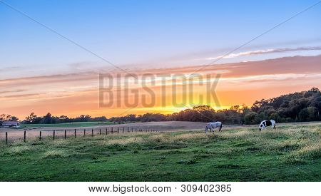 Horses Quietly Grazing In A Lush Meadow On A Rural Farm In Maryland At Sunset