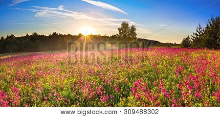 Beautiful Spring Landscape With Flowering Meadow,forest And Sunrise. Wild Purple Flowers Bloomed In