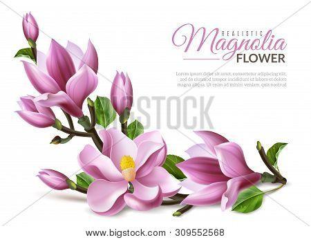 Realistic Magnolia Illustration. Realistic Magnolia Flowers Branch On White Background Isolated Elem