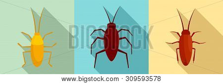 Cockroach Icons Set. Flat Set Of Cockroach Vector Icons For Web Design