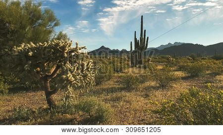 Shot Of Cactus And The Ajo Mountains In Arizona
