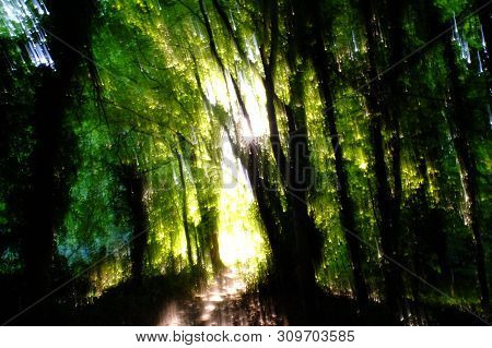 Surreal Abstract Woodland Footpath Trail Back Lit .