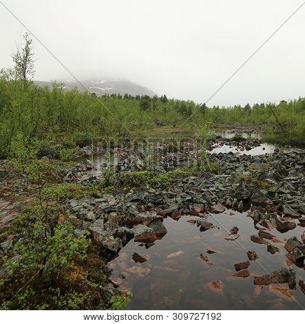 Bog At Nikkaluokta In Sweden On A Rainy Day
