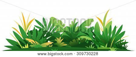 Decorative Composition Of Jungle Plants On Ground, Group Of Green Plants On The Sunny Lawn Isolated,