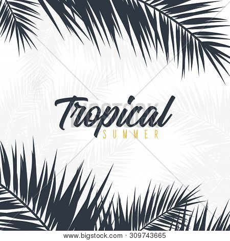 Summer Tropical Palm Leaves. Exotic Palms Tree. Floral Background.