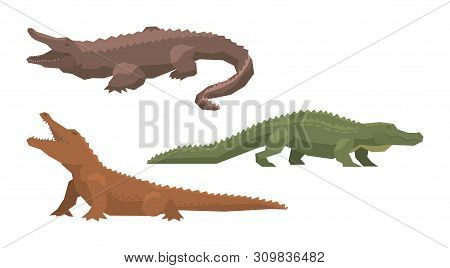 Crocodile Vector Cartoon Crocodilian Character Of Green Alligator Carnivore Illustration Animalistic