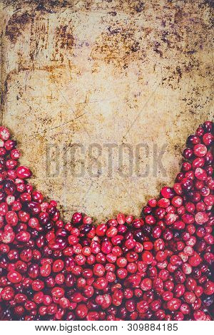 Hazy Background Of Fresh Cranberries Against Rustic Metal Backdrop With Room For Text For Thanksgivi