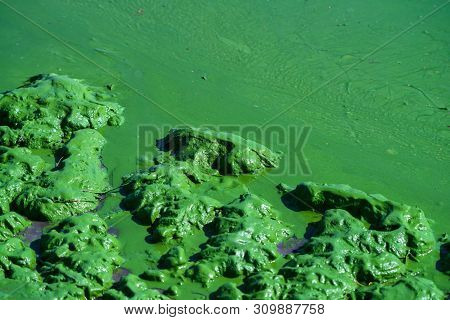 Closeup Contamination Of Water And Ecological Catastrophy