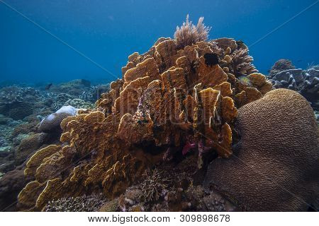 Coral Reef In South Pacific Underwater Scuba Diving