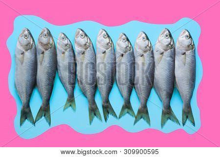 Black Sea Bluefish On Pastel Blue. Fish Pattern With Space For Text. View From Above. Fish Collage,