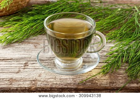A Cup Of Herbal Tea With Fresh Horsetail Plant