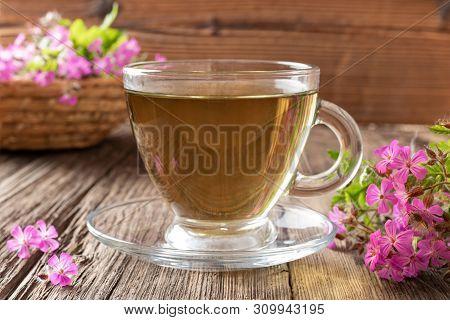 A Cup Of Herbal Tea With Fresh Geranium Robertianum Flowers