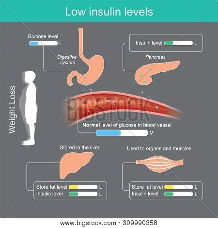 Reducing Starch And Sugar Ingredient In Foods Will Result In Pancreas Secrete Less Insulin, The Brai