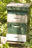 A green and white striped bee house in a forest poster
