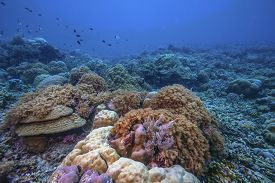 Coral Reef In South Pacific Underwater Scuba Diving Indonesia