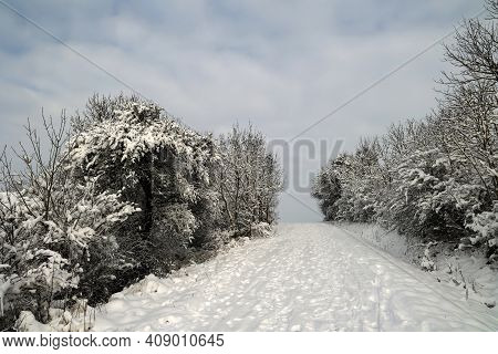 Fresh White Snow Lies On The Branches Of Bushes And Trees