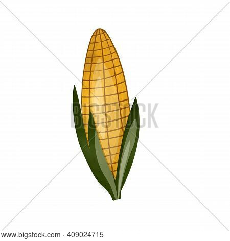 Sweet Golden Corn Isolated On White Background. Summer Farm Design Elements. Natural Fresh Bright Ta