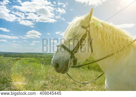 White Horse Standing At Top Of A Hill With Blue Sky Background. Horse Head Close Up. White Speckled