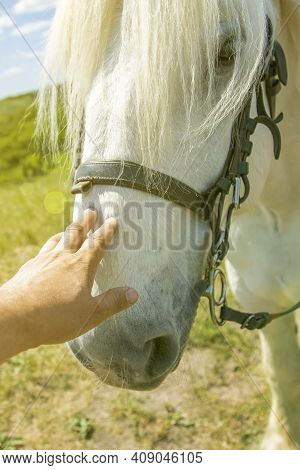 Person Touching A Horse By Hand. He Concept Of Human-nature Relations. Animal Care. Farm Feeding. Wh