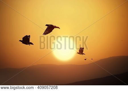 Pigeons Are Flying Over The Mountains And Beautiful Sunset. Landscape Silhouettes And Birds On The O