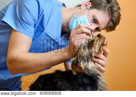 A Veterinary Ophthalmologist Makes A Medical Procedure, Examines A Dog Eyes Blood Pressure At A Vete