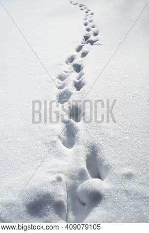 Deep Footprints In The Snow. Snowdrifts After A Snowstorm, Roads Not Cleared.