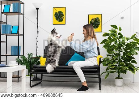 Playing With The Dog In A Game From The Paw On The Sofa In A Large Room At Home During Free Time. Pu
