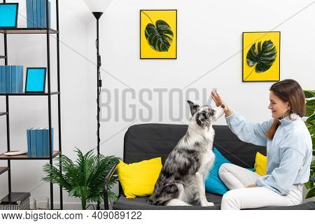 The Trainer Performs The Exercises With Her Dog, Which Puts His Nose Against Her Palm On Command. Pu