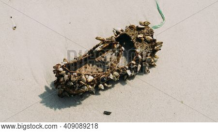 Slipper Shoe Covered With Sea Barnacles Sitting Alone On Sandy Beach.