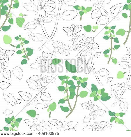 Seamless Pattern With Colored And Outlined Oregano Leaves And Twigs. Oregano Branches And Leaves Iso