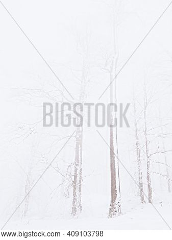 Magic Top Of Winter Trees With Gray Snowy Sky And Clouds. Thick Mist And Snowing, Sibirian Weather
