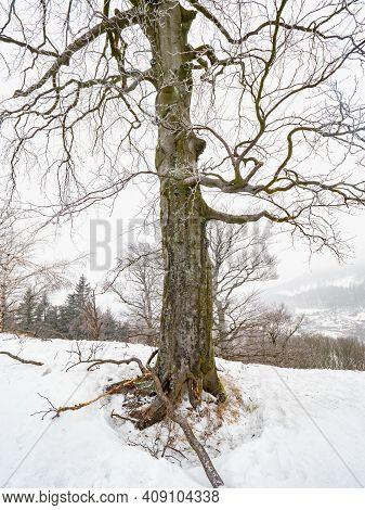 Solitude Of Lone Snowy Tree In Misty Landscape. The Middle Of Winter Season.