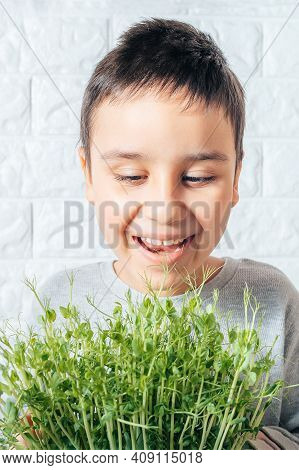 Boy Eats Peas Microgreen, Spring Avitaminosis. Sprout Vegetables Germinated From High Quality Organi
