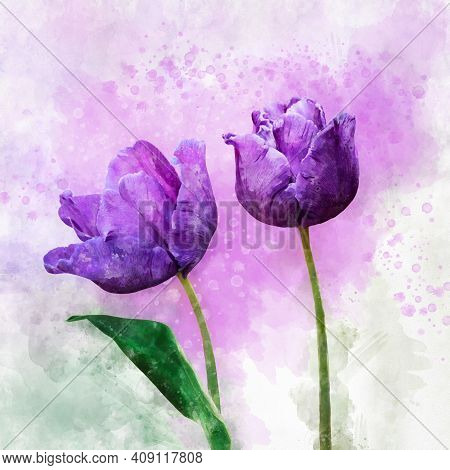 Watercolor Purple Tulips. Hand Drawn Watercolor Spring Flower Perfect For Design Greeting Card Or Pr