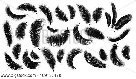 Black Feathers. Realistic Bird Weightless Plume In Different Angles Set, Fluffy Soft Swan And Goose