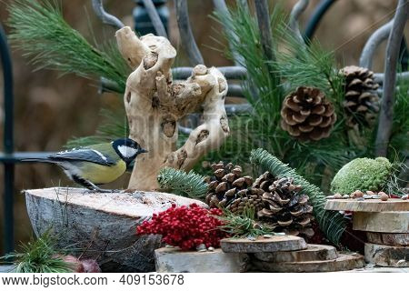 Great Tit Or Tit S, Seen From The Side. On A Natural Background, With Pine Cones, Red Berries, Branc