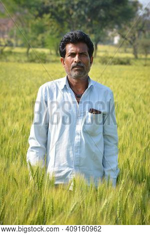 Indian Farmer At Wheat Field. Wheat Field In Countryside. Green Wheat Field. Agriculture.