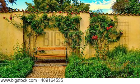 Romantic Old Bench Surrounded With Rose Flower With Wall In Behind In Beautiful Summer Day.