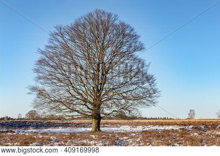 Naitonal Park Veluwe Netherrlands After Snowfall In Wintertime
